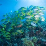 Tips for Diving in Cancun