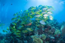 Coral Reef Diving in cancun